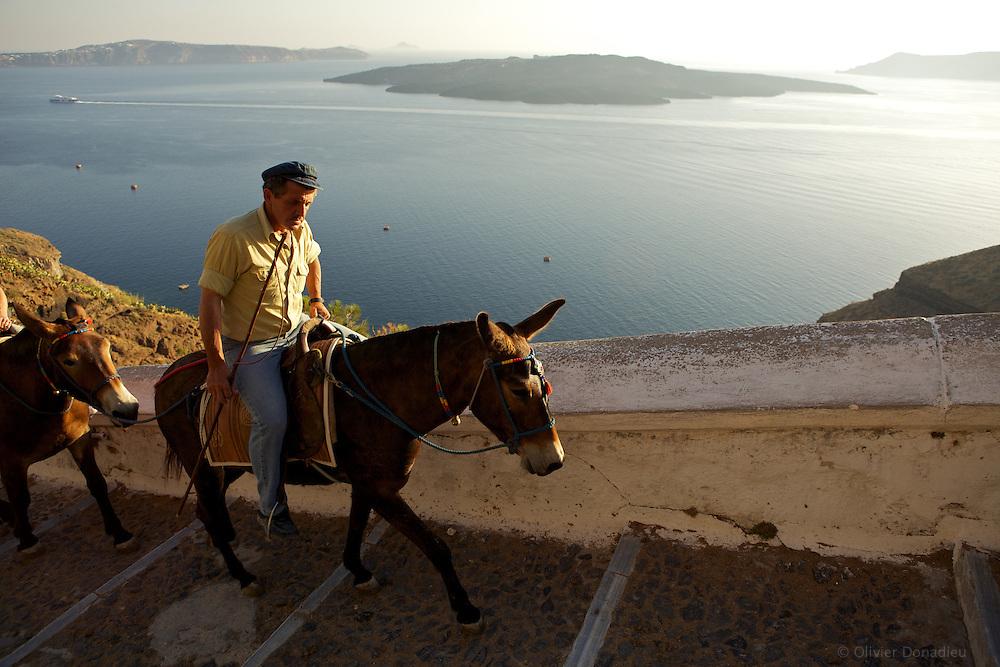 Santorini Donkeys. Les anes de Santorin.