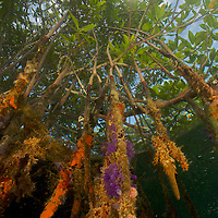 Nat Geo: Forests of the Tide