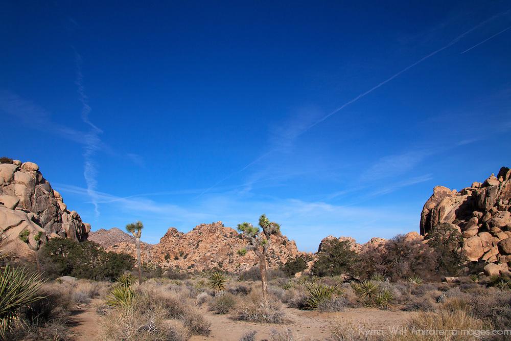 USA, California, Joshua Tree. Hidden Valley, Joshua Tree.