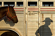 A man is silhoutted on a horse trailer at the Cobb County Equestrian Center at Jim R. Miller Park in Marietta, Georgia, on Friday, Oct. 13, 2017. The 20th Annual Cobb County Rodeo will take place on Friday, Oct. 13, and Saturday, Oct. 14, at 8 p.m. (CASEY SYKES / CASEY.SYKES@AJC.COM)