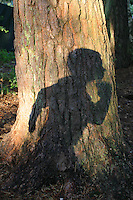 Shadow of a young boy on tree