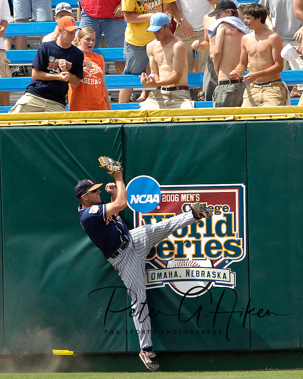 Cal State Fullerton left fielder Danny Dorn slams into the wall, as a fan (blue hat) catches Georgia Tech's Matt Wieters solo homerun in the bottom of the seventh inning.  Cal State Fullerton eliminated Georgia Tech with a 7-5 win at the College World Series at Rosenblatt Stadium in Omaha, Nebraska, June 18, 2006.