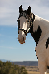 painted horse outdoors