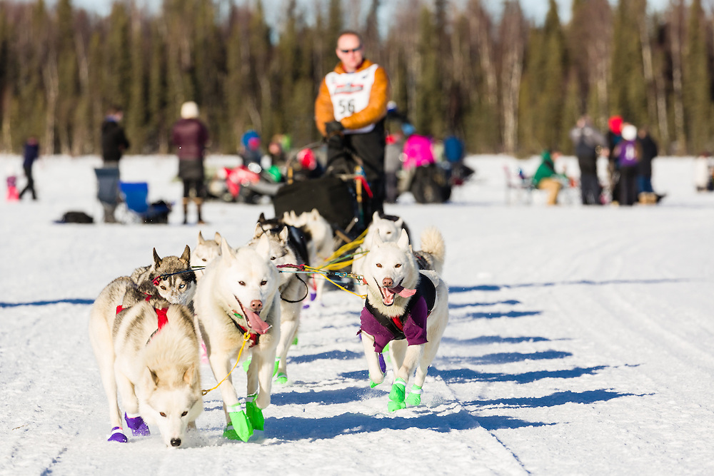 Musher Rob Cooke competing in the 44th Iditarod Trail Sled Dog Race on Long Lake after leaving the restart on Willow Lake in Southcentral Alaska.  Afternoon. Winter.