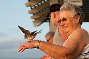 A woman smiles while a bird lands on her hand in search of food.