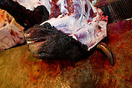 The dead bull is butchered immediately after dying in the ring at the Plaza de Toros in Morelia, Mexico.