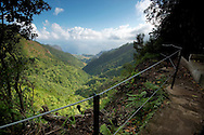 View of a levada from an hiking trail