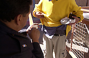 A U. S. Customs inspector processes a juvenile pedestrian entering the United States from Nogales, Sonora, Mexico at a foot station at the Dennis DeConcini Port of Entry in Nogales, Arizona.