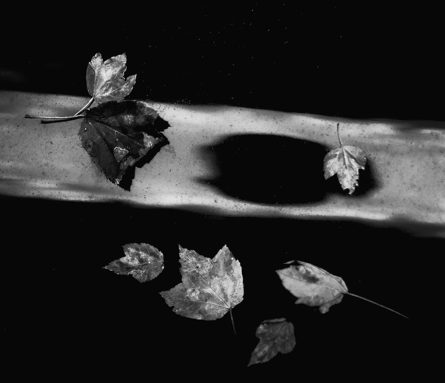 Leaves on car. ©Geoffrey S. Baker