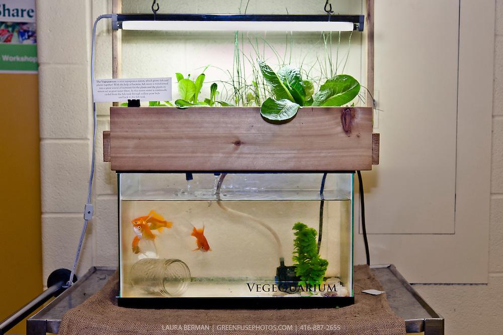 Vegequarium A Mini Aquaponics System Designed By Justin