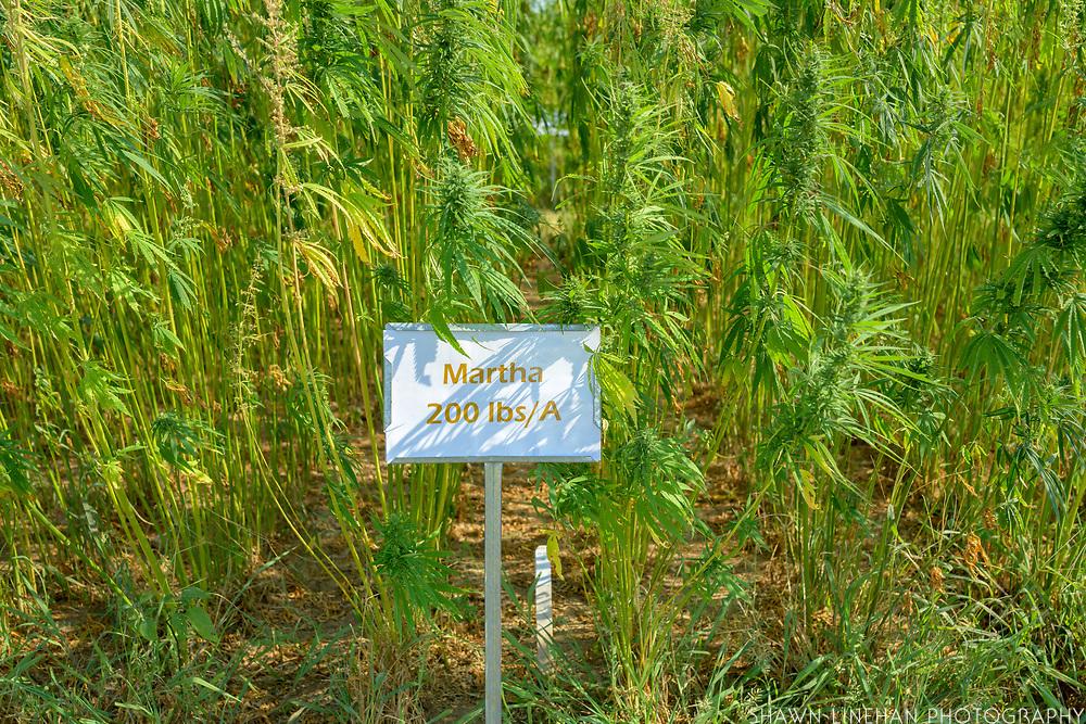 """Martha"" Variety of hemp"