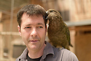 [captive] Kea (Nestor notabilis) with Kea researcher Dr. sc. nat. Gyula K. Gajdon. Keas are kept in an outdoor aviary (250 m2) at the Kea Lab of the Messerli Research Institute. Researchers can cut off certain areas of the aviary in a way that they are only accessible for single animals. The picture was taken in cooperation with the University of Vienna (UniVie) and University of Veterinary Medicine Vienna (VetMed). | Kea oder Bergpapagei (Nestor notabilis) mit Kea-Forscher Dr. sc. nat. Gyula K. Gajdon. Im Kea Lab des Messerli Forschungsinstituts werden die Tiere in einer 520 m2 großen Außenvoliere gehalten. Forscher können für die Versuche bestimmte Bereiche abtrennen und nur für einzelne Tiere zugänglich machen. Das Bild wurde in Zusammenarbeit mit der Veterinärmedizinischen Universität Wien und der Universität Wien erstellt.