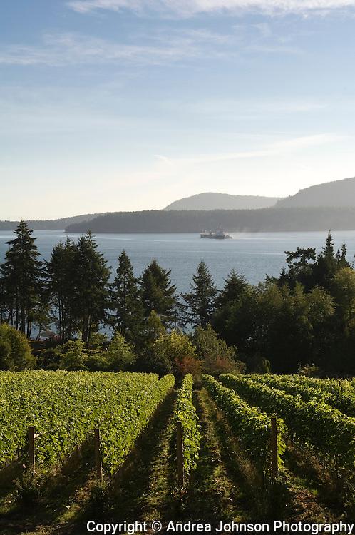 Morning Bay Vineyard and Estate Winery, North Pender Island, Gulf Islands, British Columbia, Canada.