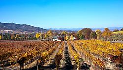 Fall colors the vines after harvest at Dancin Vineyards, Medford, Oregon.