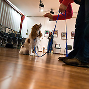 November 11, 2009 - Bronx, NY : Jorge Melara leads a dog obedience course at the Fieldston Ethical Culture Society on Thursday in mid November. Tali Kest, in pink, provides positive reinforcement to her Cavalier King Charles Spaniel, Yofi.