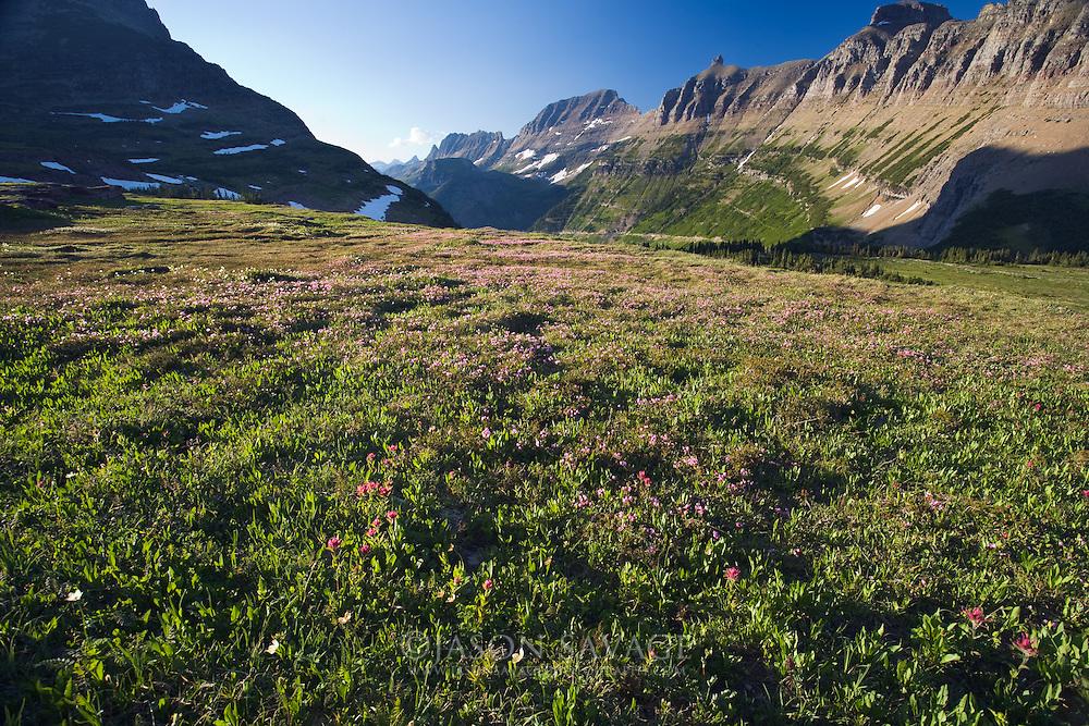 Atop Logan Pass Glacier National Park