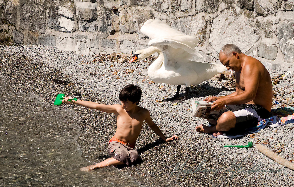 a boy, a man, and a swan enjoy a small rocky beach on Lac Lemon (Lake Geneva).<br />