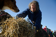 Sebastian Schnuelle spreads straw for his dogs in the Kaltag checkpoint on Saturday.