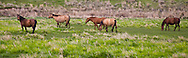 5-6 horses in an open prairie in eastern Oregon