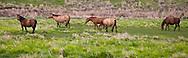 5-6 horses in an open prairie in eastern Oregon
