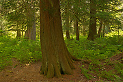 Forest along the Exchampsiks River<br />
