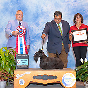 Greeley Kennel Club 08/17/2019
