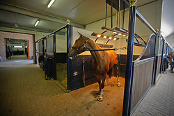 Stephex stables<br /> Wolvertem 2008<br /> Photo © Hippo Foto