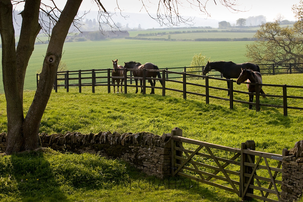 Bay horses in paddock, Chedworth, Gloucestershire, United Kingdom