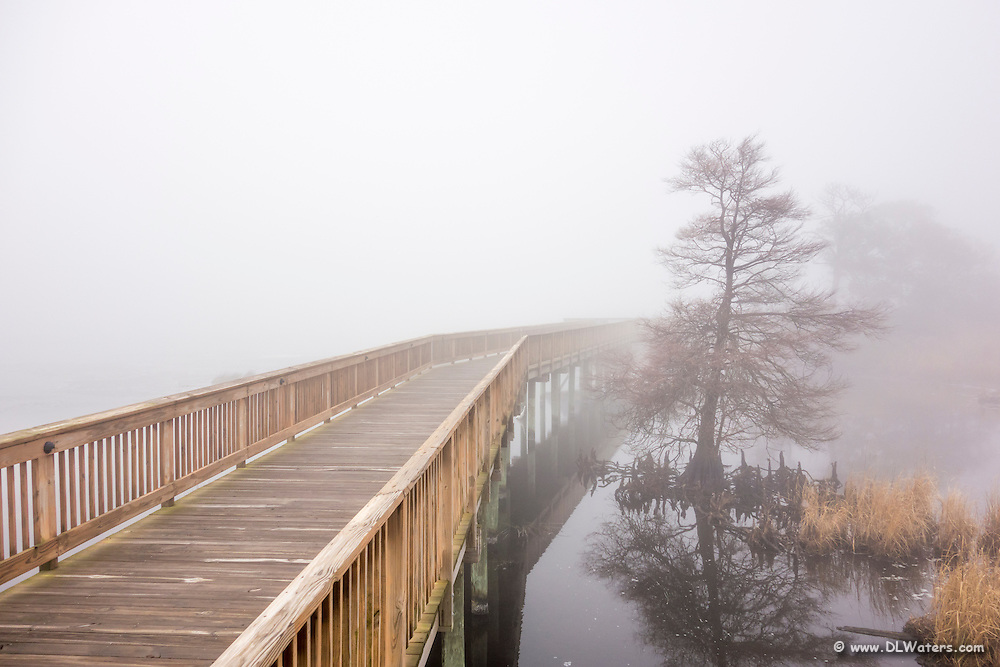 Duck boardwalk in the fog on the Outer banks, NC.