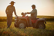 Western ranch manager at sorghum harvest, talking with father on 4-wheeler