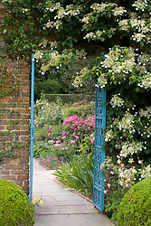 Doorway with blue iron gate into the Rose Garden at Sissinghurst Castle. Hydrangea petiolaris on the wall