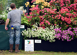 © Licensed to London News Pictures. 02/07/2012. East Molesey, UK A man tends to flowers on a stall. The RHS Hampton Court Palace Flower Show 2012. The show runs 3-8 July, 2012. Photo credit : Stephen Simpson/LNP