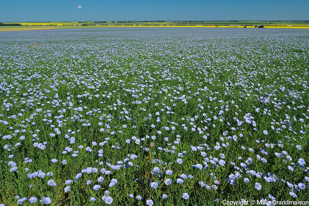 Flax <br /> Treherne<br /> Manitoba<br /> Canada