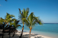 Palm trees and a white sand beach near the Lux le Morne Hotel, on the Le Morne Brabant Peninsula Mauritius, The Indian Ocean