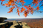 Colorful fall leaves against a blue sky and scenic overlook in Arkansas.