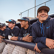 Members of the Cypress baseball team get excited for their game against Cal State Fullerton on Friday, November 5, 2016 at Goodwin Park in Fullerton, California. <br /> <br /> Photo by Morgan Lieberman/ Sports Shooter Academy