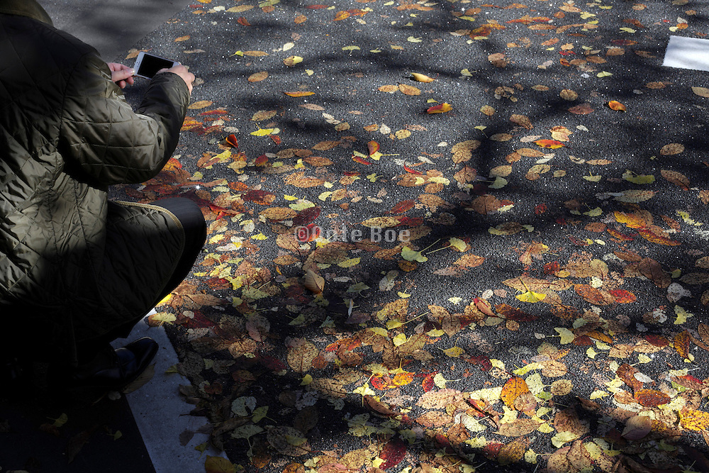 person photographing autumn leaves embedded into asphalt road surface