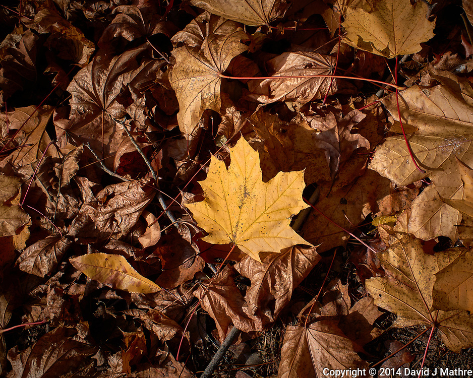 Autumn leaves in my backyard. Outdoor Nature in New Jersey. Image taken with a Leica T camera and 23 mm f/2 lens