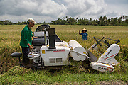 Farmers harvest paddy using machine in Bantul, Yogyakarta, Indonesia, 2017. Harvesting paddy using machine becomes an option to the lower number of workers for harvesting. The high cost for machine maintenance and low rate of machine rent to farmer become the challenge of its sustainable system.