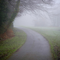 Trees in a misty park with path