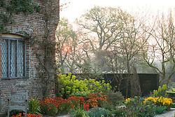 Sunrise in the Cottage Garden at Sissinghurst Castle. Wallflowers and euphorbia.