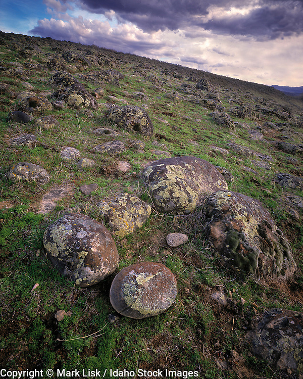 Lava rock rounded by the Bonneville floods decorate the Snake River Plain.