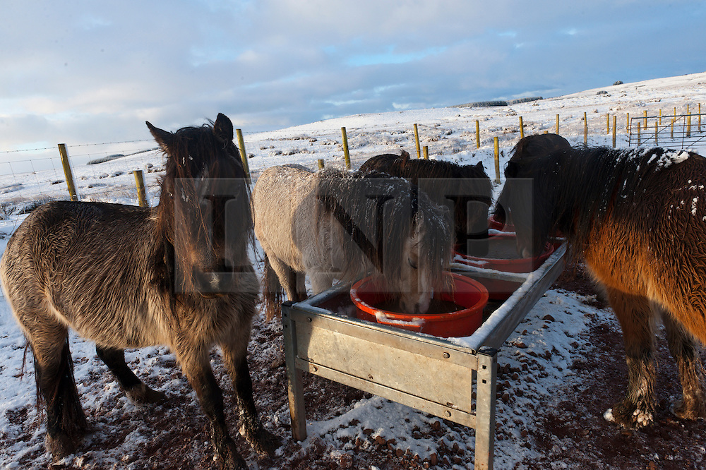 © Licensed to London News Pictures. 28/02/2017. Mynydd Epynt, Powys, Wales, UK. Welsh ponies are seen at a feeder in the wintry landscape on the high moorland of the Mynydd Epynt range between Builth Wells and Brecon in Powys, Wales, UK after about 6cm of snow fell last night. Photo credit: Graham M. Lawrence/LNP
