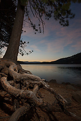 """Donner Lake Sunrise 7"" - These exposed tree roots were photographed at sunrise along the North shore of Donner Lake in Truckee, California."