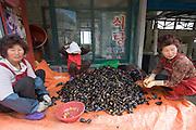 Dadohae Marine National Park. Dolsan-do. Fresh mussels.