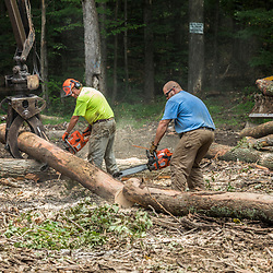 A logging operation near Egg Mountain in Sandgate, Vermont.