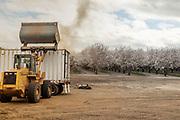 California, Stewart and Jasper almond company