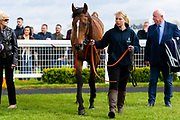 Greeley ridden by Rob Hornby and trained by Rod Millman in the F45 Bath Training Guaranteed Results Handicap race.  - Ryan Hiscott/JMP - 06/05/2019 - PR - Bath Racecourse- Bath, England - Kids Takeover Day - Monday 6th April 2019