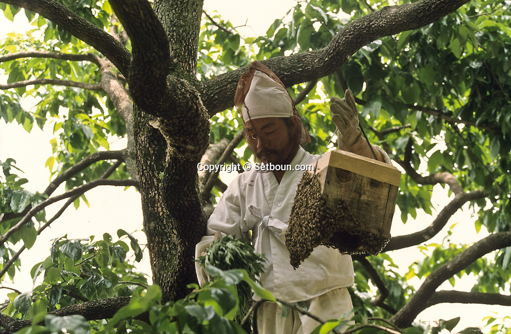 Chonhakdong traditional confucianist village  Apiculture is the main income of the village.    Korea   village traditionnel confucianiste de Chonhakdong  L'apiculture est une des principales ressources du village         Coree  //////R28/18    L2635  /  R00028  /  P0003012