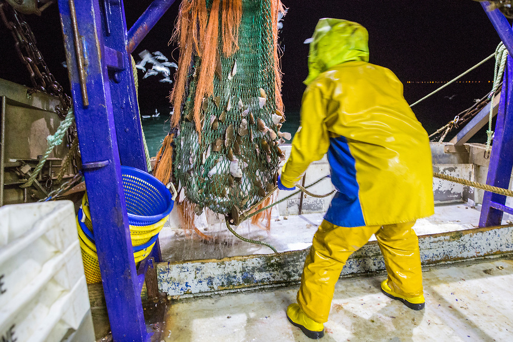 Luke empties the first net of the evening, there are 3 nets out each time. Luke is a Folkestone based fisherman out trawling for a 12 hour night shift on a fishing trip in his boat Valentine (FE20), Hythe Bay, the English Channel, United Kingdom. (photo by Andrew Aitchison / In pictures via Getty Images)